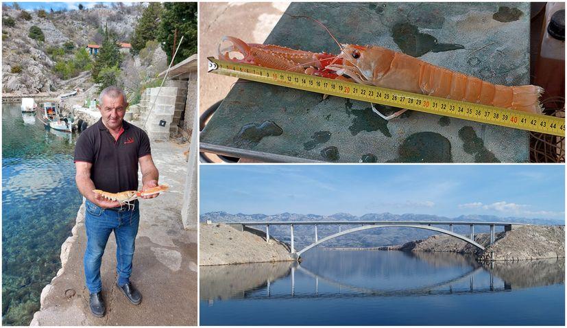 Croatian fisherman catches record-long scampi near Pag bridge