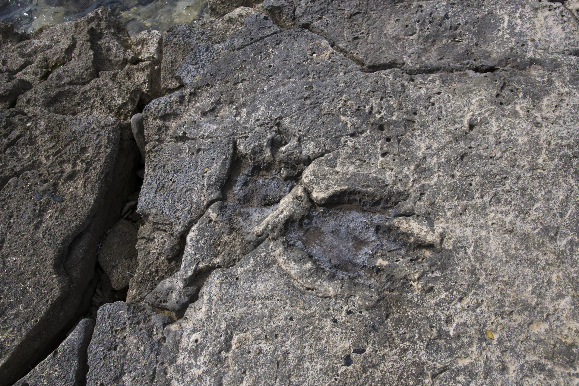 Dinosaur footprints and bones discovered on Brijuni become first protected fossil in Croatia