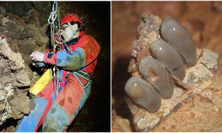 60 million year-old fish fossils found on island of Korčula