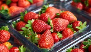 Strawberry picking season starts in south Croatia, 600 tonnes of produce expected