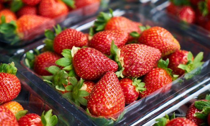 Strawberry picking season starts in southern Croatia, 600 tonnes expected