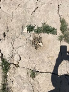 Have dinosaur footprints been discovered on Croatian island of Brač?