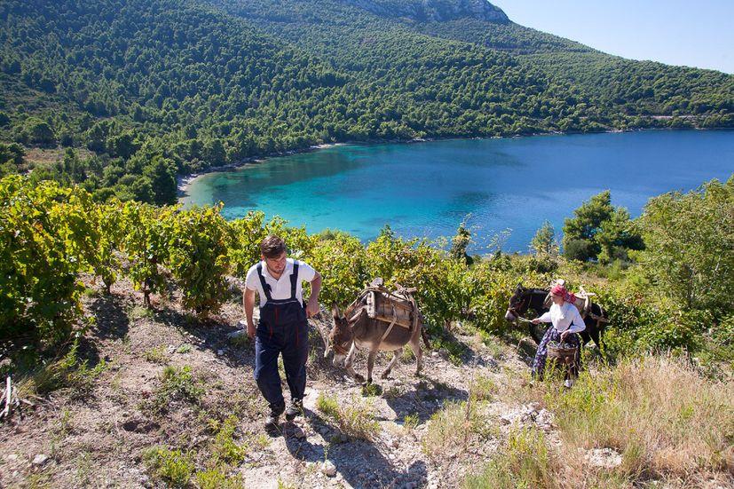 A month of wine hedonism on Croatia's Pelješac peninsular