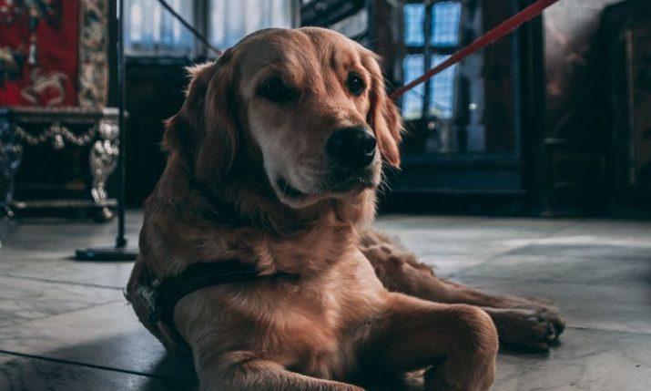 First fully pet-friendly museum in Croatia