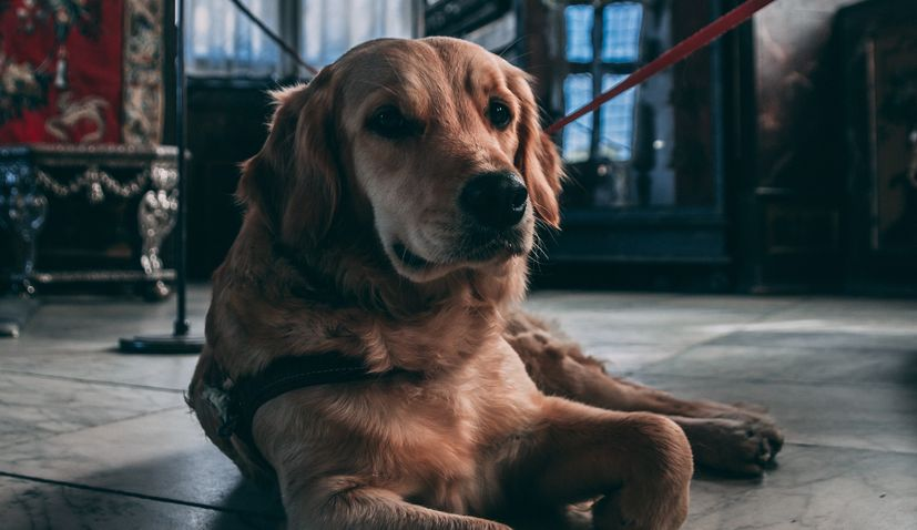 City Vinkovci First fully pet-friendly museum in Croatia
