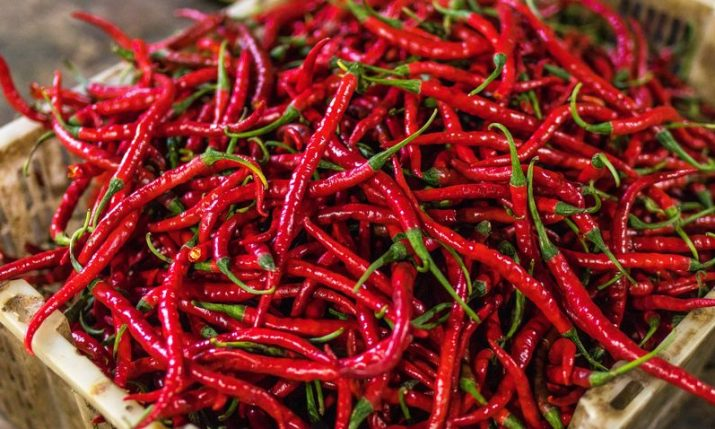 Croatian chili pepper grower wins young farmer of the year title