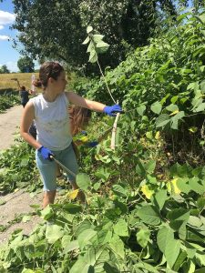 City Windows in Nature project starts in Zagreb