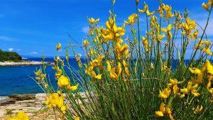 Ližnjan: A must-visit in Croatia for nature lovers