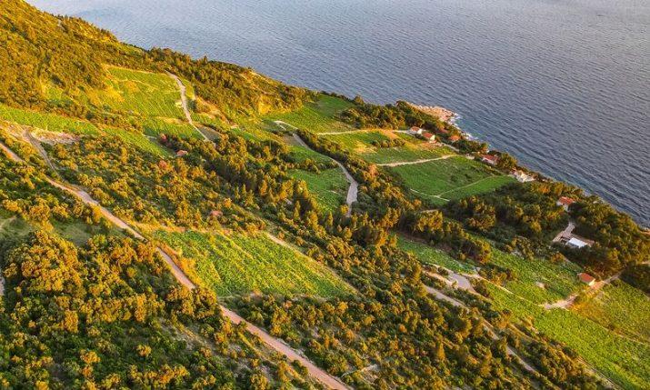 Pelješac Cellars Festival a success – more events coming to the peninsula