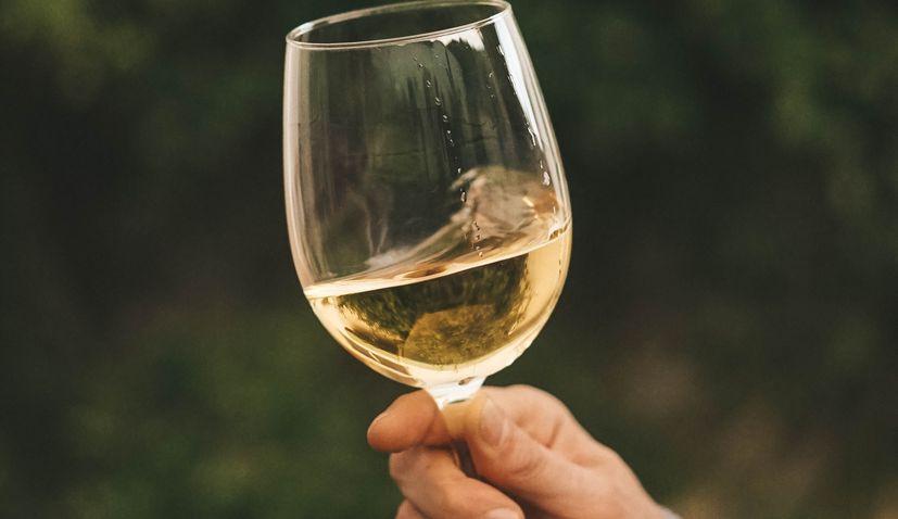 Istrian winemakers expecting stellar 2020 vintage