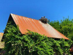 Tourists discovering Lonjsko Polje Nature Park - 150% increase in visitors