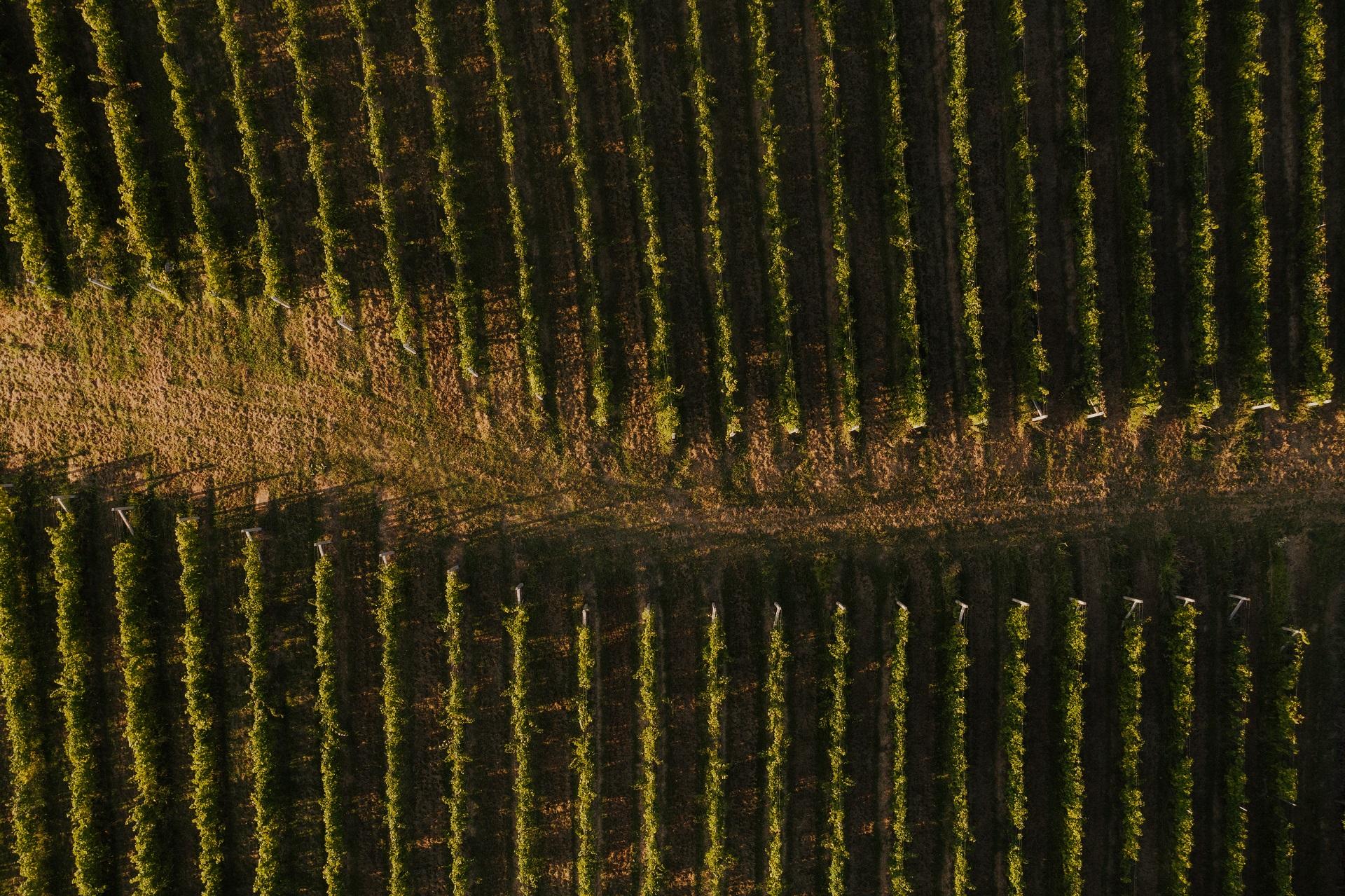5 reasons why food and wine lovers should visit Croatia's Moslavina region