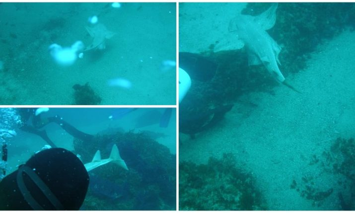 Rare and critically endangered shark species photographed for first time near Croatian island of Ugljan