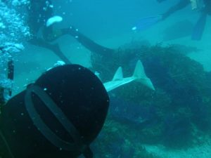 Rare and protected shark species photographed for first time near Croatian island of Ugljan