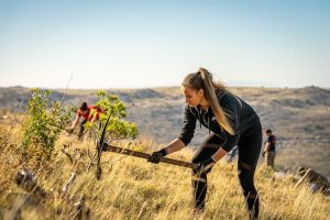 Europe's largest volunteer afforestation action starts again in Dalmatia