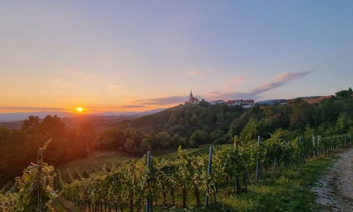 Vivodina Wine and Walk: Discover top continental Croatian wines