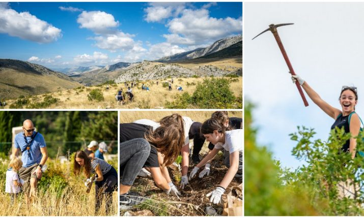 Australians, Brits and South Africans join locals in afforestation action in Split